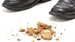 Khoa học: thức ăn rơi xuống đất nhặt lên ăn được!