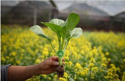 Bốn chàng công nghệ bỏ nghề đi trồng rau sạch