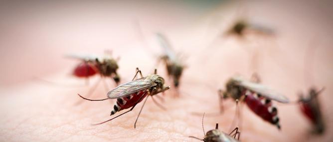 11 lý do khiến muỗi là loài cực kỳ nguy hiểm trên Trái đất