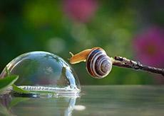 Bộ ảnh macro tuyệt đẹp về ốc sên
