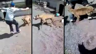 Cảnh báo: Đừng bao giờ đùa với chó!