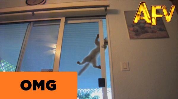 """Clip """"mèo nhện"""" gây sốt trên Youtube"""