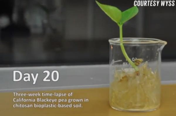 Tìm ra vật liệu nhựa siêu bền, tự hủy kết hợp từ vỏ tôm và tơ tằm