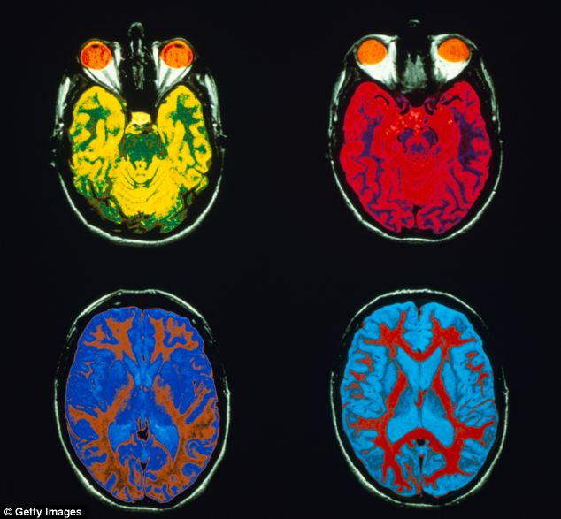 Ký ức được hình thành như thế nào trong bộ não?