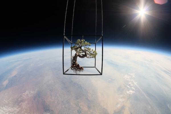 Tuyệt vời bộ ảnh cây cảnh và hoa bay trong không gian