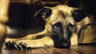 Chó cũng biết ghen như người?