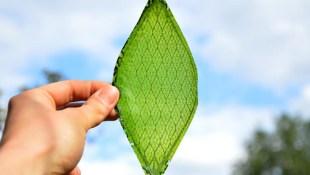Đã có lá nhân tạo có thể quang hợp như lá thật