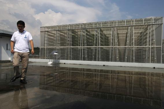 Panasonic, một trong những tập đoàn điện tử hàng đầu Nhật Bản, giờ đây sẽ là một nhà cung cấp rau diếp và củ cải lớn cho Singapore. Trang trại trong nhà của Panasonic xây dựng tại đảo quốc này sẽ góp phần đảm bảo an ninh lương thực cho Singapore.