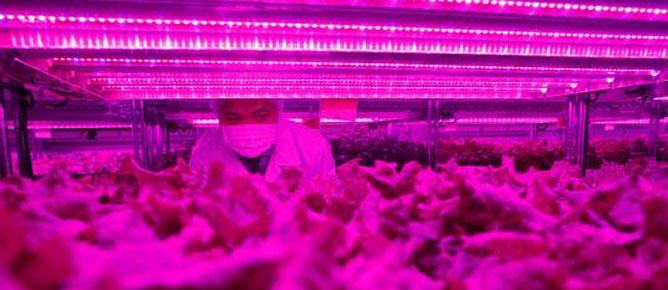 Panasonic chuyển sang... bán rau tại Singapore