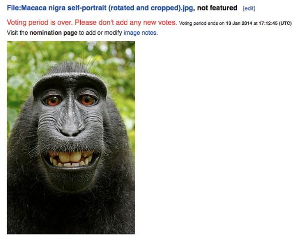 Tranh chấp bản quyền ảnh tự sướng của khỉ