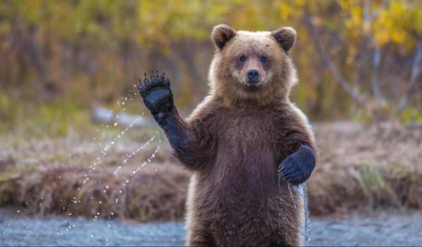 50 bức ảnh tuyệt vời của động vật trong tự nhiên