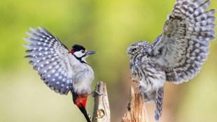 Những bức ảnh lạ kỳ của động vật trong tự nhiên