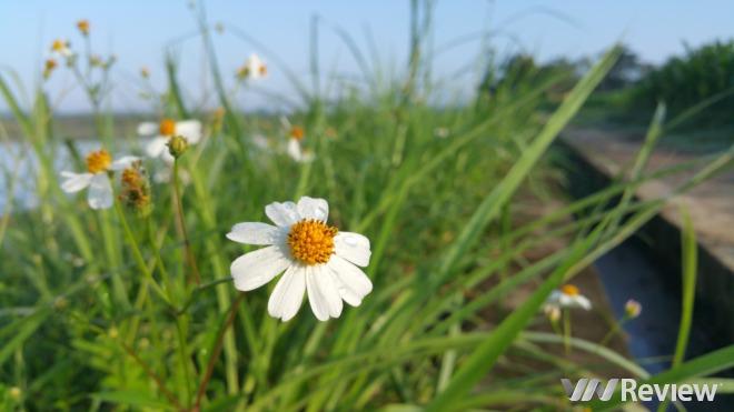 Phong cảnh quê hương qua ảnh chụp từ Galaxy Note 4