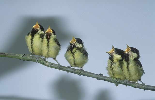 Loài chim khi say rượu cũng