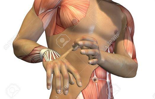 Sẽ dùng cơ bắp nhân tạo để thử nghiệm thuốc?
