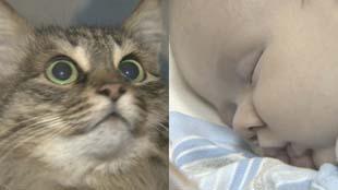 Mèo hoang ủ ấm cứu em bé bị bỏ rơi ngoài phố