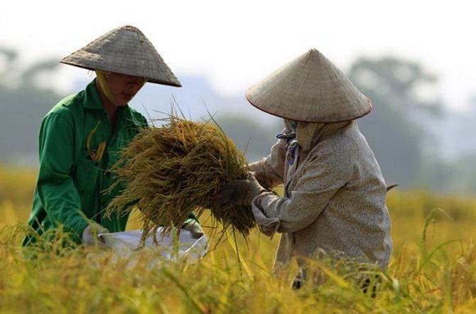 FPT, Viettel đầu tư vào nông nghiệp