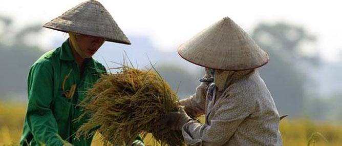 Doanh nghiệp IT Việt nhắm đến đổi mới nông nghiệp