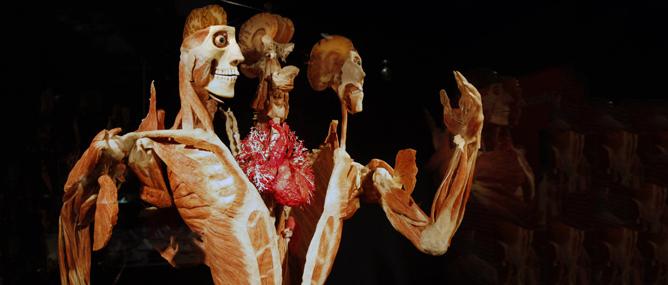 Người ta sẽ làm gì với thân xác bạn khi hiến tặng cho khoa học?