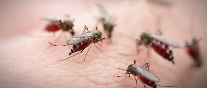 Bill Gates muốn diệt muỗi hàng loạt bằng socola và súng laser