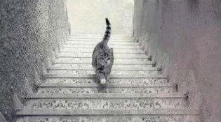 Tranh cãi mới trên Internet: Chú mèo lên hay xuống?