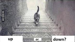 Tại sao có thể khẳng định con mèo đi xuống cầu thang?