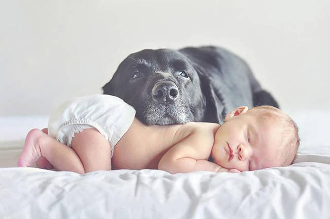 Tại sao nhiều người yêu thích loài chó?