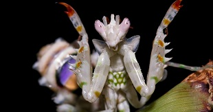 """10 côn trùng có """"gương mặt"""" kì dị nhất thế giới"""