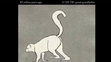 545 triệu năm tiến hoá gói gọn trong 1 phút
