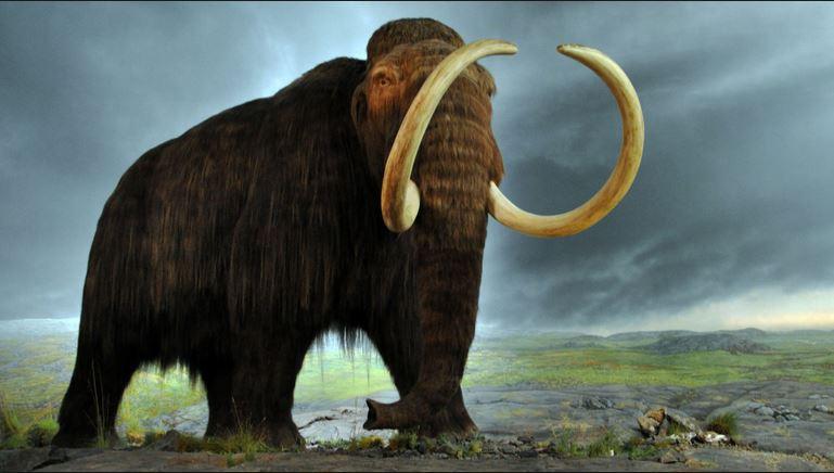 Voi ma mút tuyệt chủng không phải do con người