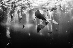 Bộ ảnh xuất sắc đoạt giải National Geographic Traveler Photo Contest 2015