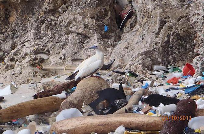 Chúng ta đang ăn rác thải nhựa hàng ngày