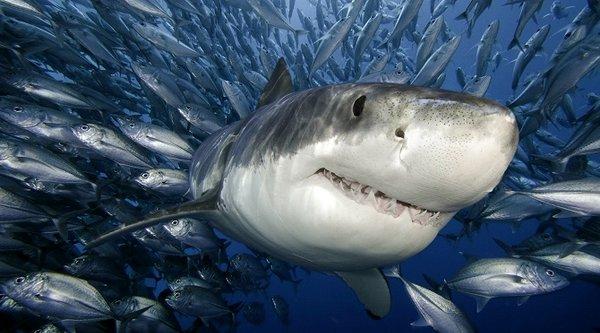 Chưa tới nửa thế kỷ, con người đã tiêu diệt phân nửa các loài sinh vật biển