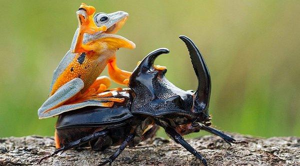 Chuyện 'quá giang qua đường' giữa các loài động vật