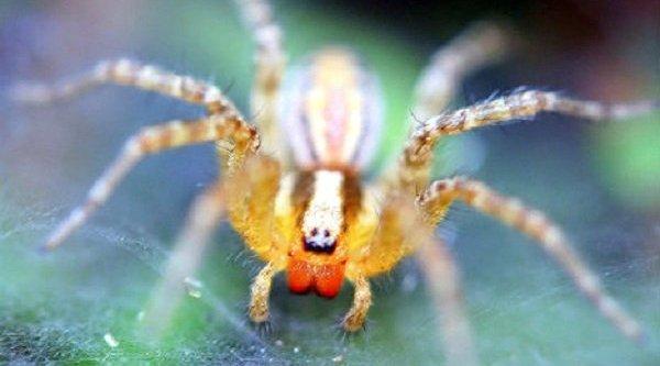 Những loài động vật có bộ não 'quái dị' nhất