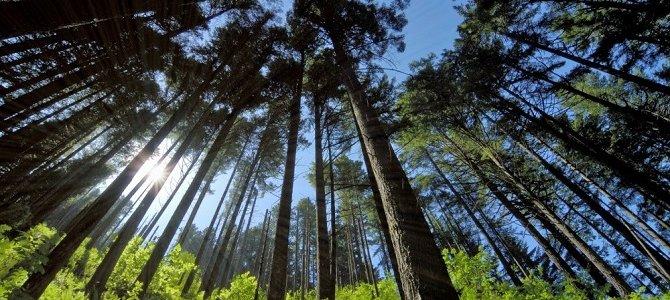 Trái Đất mất phân nửa số cây xanh từ khi loài người xuất hiện