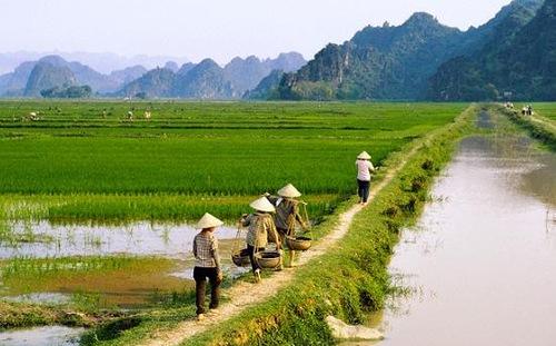 Việt Nam đứng đâu trong xếp hạng ung thư thế giới?