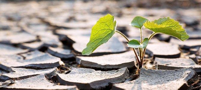 Nghiên cứu gene giúp cây 'tái sinh' đối phó với biến đổi khí hậu