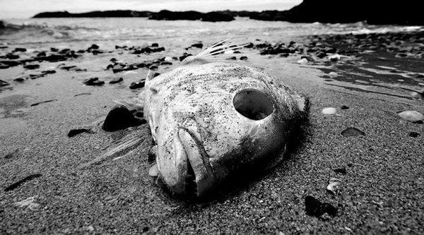 Số lượng 'vùng chết' dưới biển ngày càng nhiều