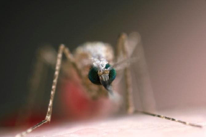Công nghệ của Đại học California, Irvine sẽ giúp cho gen kháng sốt rét được di truyền rộng khắp trong quần thể muỗi, khiến cho loài côn trùng này mất khả năng lây truyền căn bệnh chết người trên cho con người.