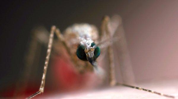 Kỹ thuật biến đổi gene có thể tiêu diệt bệnh sốt rét