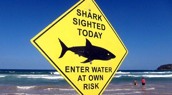 Úc sử dụng drone để cảnh báo cá mập