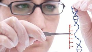 Chỉnh sửa gen trực tiếp để chữa bệnh máu khó đông