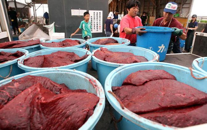 Ngư dân ở Minamiboso, Nhật Bản đang xử lý thịt cá voi. Thịt cá voi được cho là có vị giống như tuần lộc hoặc hươu hơn là cá. Ảnh Getty