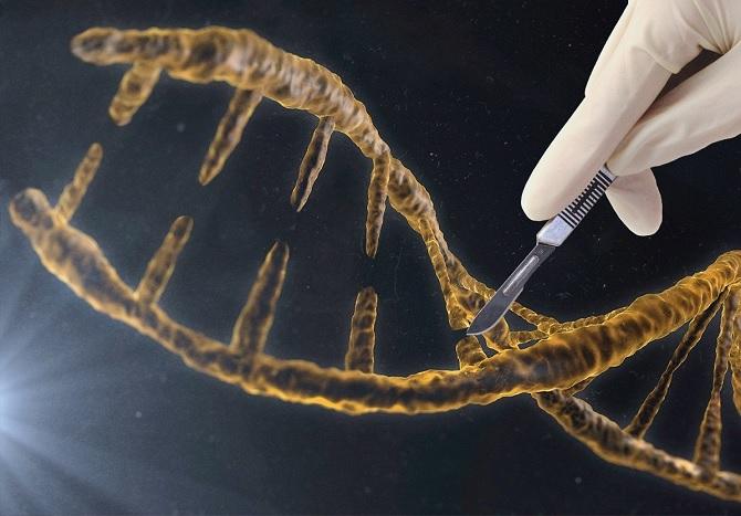 10 thành tựu y học nổi bật 2015, từ viagra cho nữ đến biến đổi gien di truyền