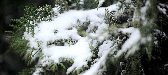 Tại sao miền Nam nóng 'chảy mỡ' còn miền Bắc co ro trong giá lạnh?