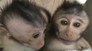 """Trung Quốc """"tạo ra"""" khỉ tự kỷ để chữa trị cho con người"""