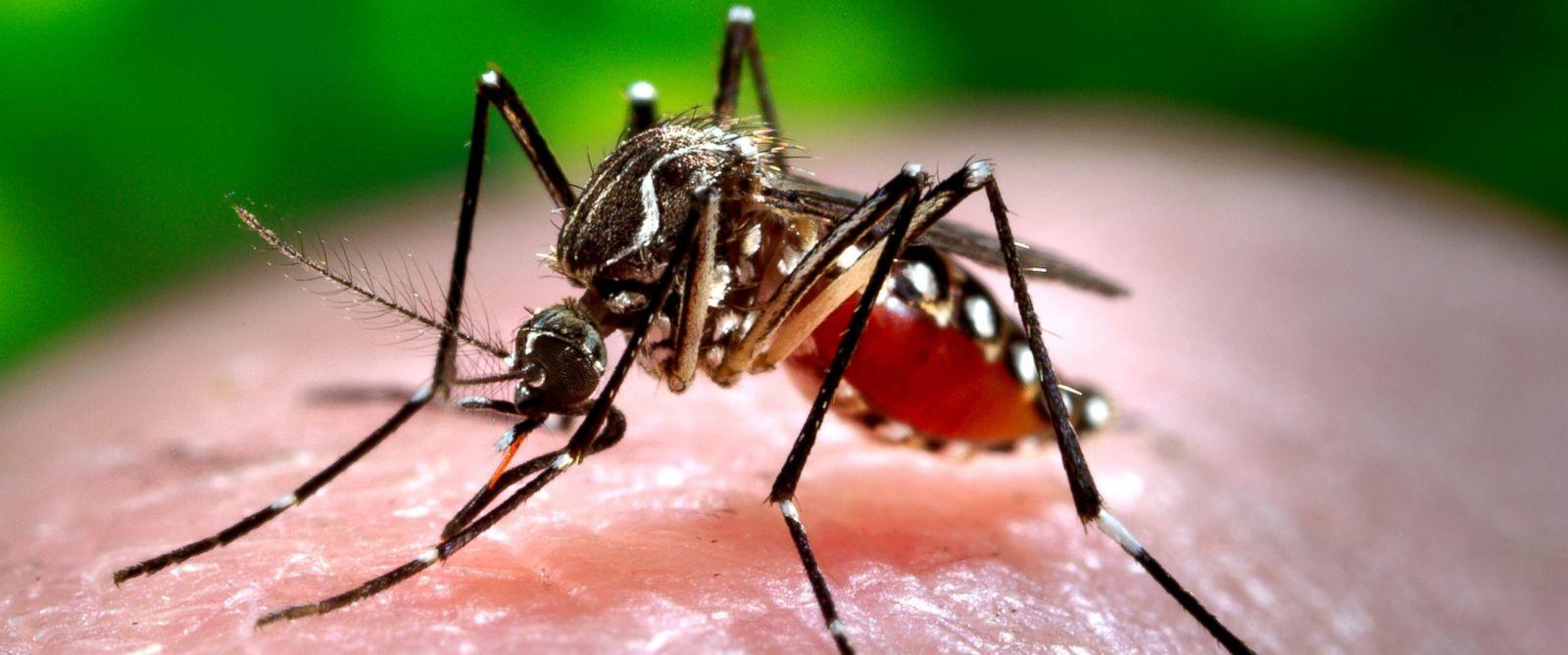Những điều cần biết và cách phòng tránh virus Zika