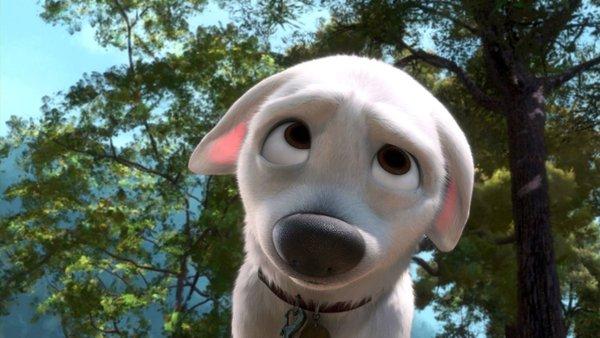 Tại sao chó thường nghiêng đầu khi ta trò chuyện với chúng?