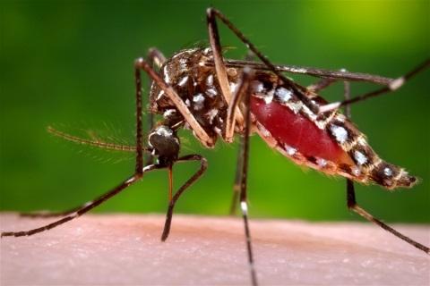 Muỗi Zika xuất hiện ở nhiều nước quanh Việt Nam